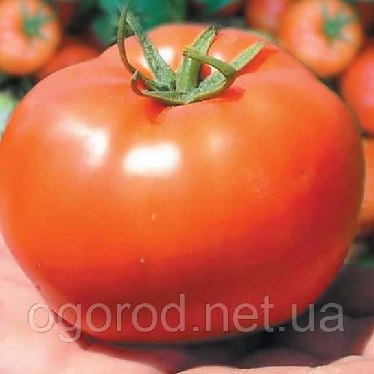 Бобкат F1 насіння томату низькорослого Syngenta Голландія 1000 шт