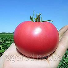 Хепинет F1 1000 шт. насіння томату низькорослого рожевого Syngenta Голландія