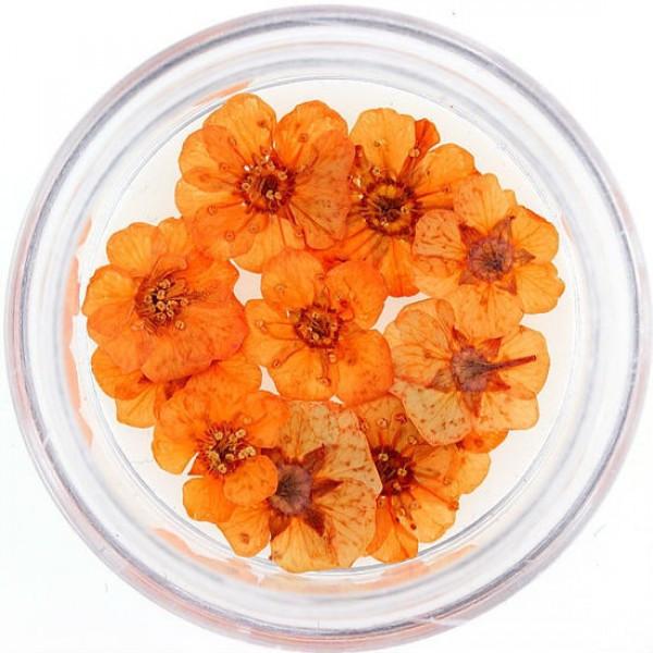 Сухоцветы №10