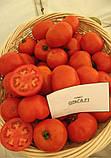 Ольга F1 1000 шт. семена томата низкорослого Vilmorin Франция, фото 2
