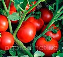 Ольга F1 10 шт семена томата низкорослого Vilmorin Франция