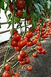 Зульфия F1 100 шт. семена томата высокорослого Rijk Zwaan Голландия, фото 2
