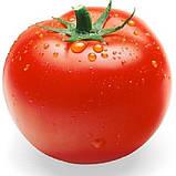 Зульфия F1 100 шт. семена томата высокорослого Rijk Zwaan Голландия, фото 3