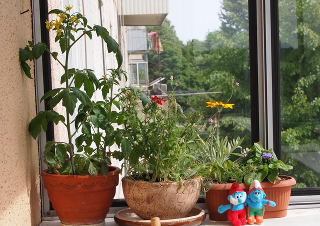 Балконні рослини