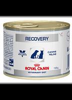 Royal Canin Recovery Canine Feline лечебный влажный корм (Роял Канин) Упаковка 12 шт