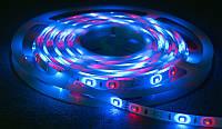 Світлодіодна стрічка 3528 RGB 60LED/m IP20 негерметична, фото 1