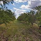 100% миндальная паста 80г, натуральная, всегда свежая, украинский живой миндаль, без добавок, фото 4