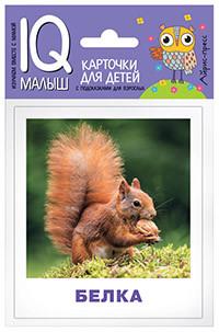 Умный малыш. Кто живёт в лесу? Набор карточек для детей.