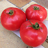 Насіння томату Афен F1 (250 нас.) Clause, фото 3