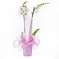 Ваш cад Орхидея фаленопсис 2 цветоноса в подарочной упаковке