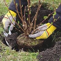 Ваш cад Высадка растений: % рассчитывается от сметной стоимости растений с учетом сложности выполн работ