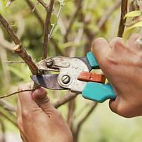 Ваш cад Обрезка деревьев высотой до 5 м, цена за шт.
