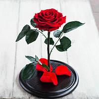 Стабилизированная роза в колбе Lerosh - Premium плюс 33 см, Красная SKL15-138939