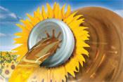 Семена подсолнечника Syngenta НК Брио cru, фото 1