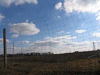 Дешева сітка Козачка полегшена - шарнірна сітка з оцинкованого дроту для дешевих парканів