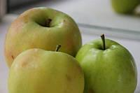 Саженцы яблони Стеллар (54-118). Позднеосенний сорт.