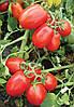 Семена томата 8504 F1 5000 с. Lark Seeds