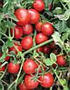 Семена томата Шкіпер F1 1000 с. Lark Seeds