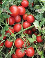Семена томата Шкіпер F1 10000 с. Lark Seeds