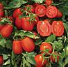 Семена томата Платон  F1 10 000 н.
