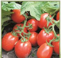 Семена томата Ріо Гранде 0,5 кг Lark Seeds