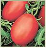 Семена томата Ріо Фуего 0,5 кг Lark Seeds