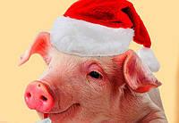2019 год Свиньи — чего ожидать...