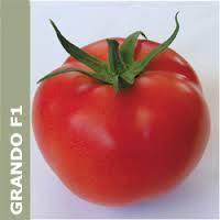 Насіння томату Грандо F1 5000 с. Lark Seeds