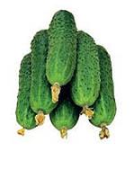 Огурец Джерело сорт средне-ранний для открытого грунта хорош в засолке и консервации-устойчив