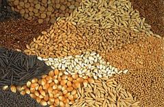 Семена (подсолнечник кукуруза люцерна свекла травы)