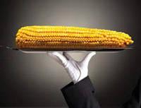 Семена кукурузы Syngenta СИ Ондина ФАО 260