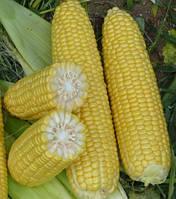 Кукурудза цукрова Шамо F1 2500 с. Lark Seeds