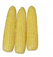 Кукурудза цукрова Хаммер F1 2500 с. Lark Seeds