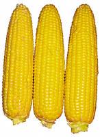 Кукурудза цукрова Світ Парадайз F1 2500 с. Lark Seeds