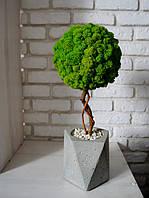 Стабилизированное дерево в многоугольном бетонном кашпо, h -50 cм, фото 1