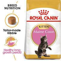 Роял Канин Мейнкун киттен Royal Canin Mainecoon kitten сухой корм для котят породы мейн кун 2 кг
