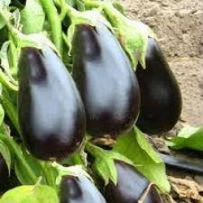 Семена баклажан Херсонский 100 г