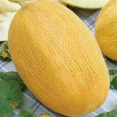 Семена дыни Алушта 1 кг