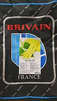 Семена овощной фасоли Милор (10кг) BRIVAIN