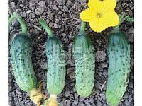 PICKLING CUCUMBER ROCKET F1 Огурец Самоопыляемый Bursa Seeds Turkey 10гр