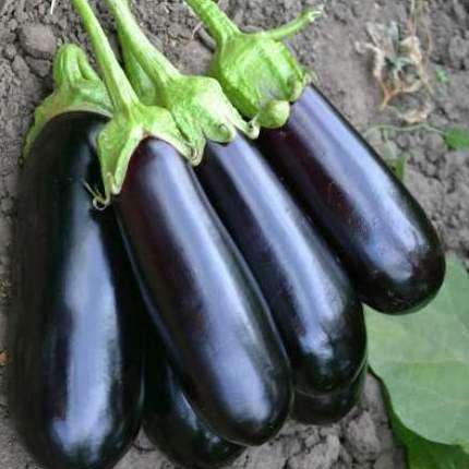 Семена баклажана  Миринда F1 (1000 сем.) Lark Seeds
