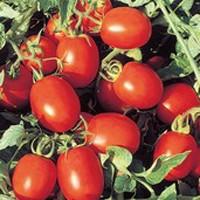 Перфектпіл F1 томат для переробки 25000нас Seminis