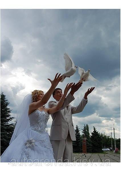 Білі голуби на весілля у Києві ( пара)