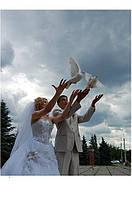 Белые голуби на свадьбу в Киеве