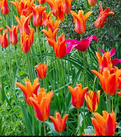 Какова потребность в свете различных растений?