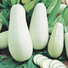 Семена кабачка Белоплодный  1 кг