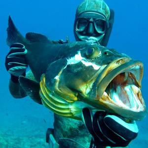 Товары для подводной охоты