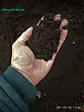 Грунт Чорнозем в мішках купити Київ і область Чорнозем Київ, фото 5