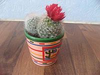кактус, фото 1