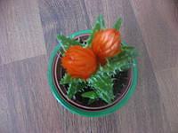 кактусы, фото 1